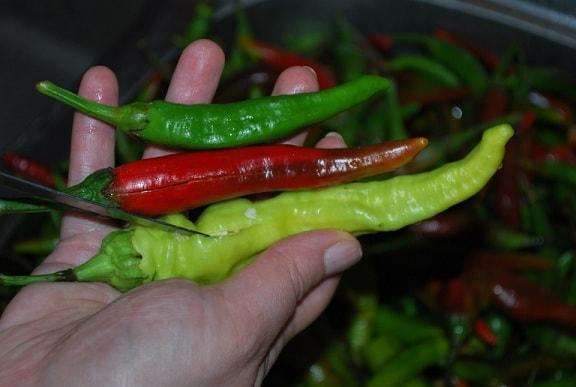 Маринованный по-грузински стручковый перец (11)