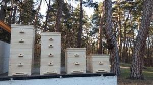Трепанг на меду и перга - полезные свойства и применение (4)
