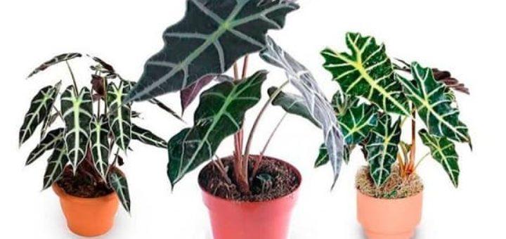 Красивые растения для дома в горшках (1)