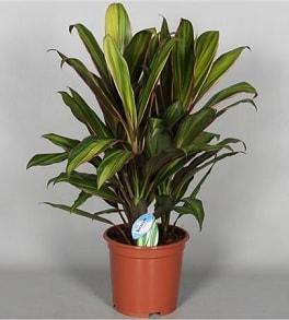 Красивые растения для дома в горшках (3)