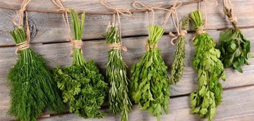 Полезные свойства пряных трав (2)