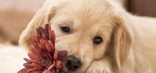 Недержание мочи у собак и кошек (3)