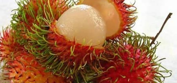 Выращиваем тропические фрукты в домашних условиях (1)